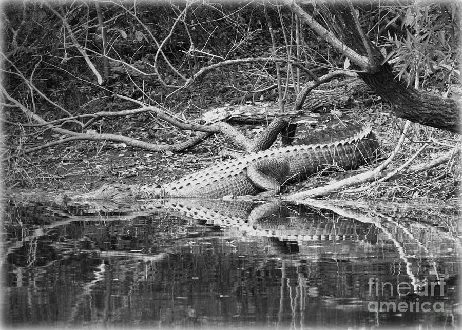 Alligator Photograph - The Beast That Lives Under The Bridge by Carol Groenen