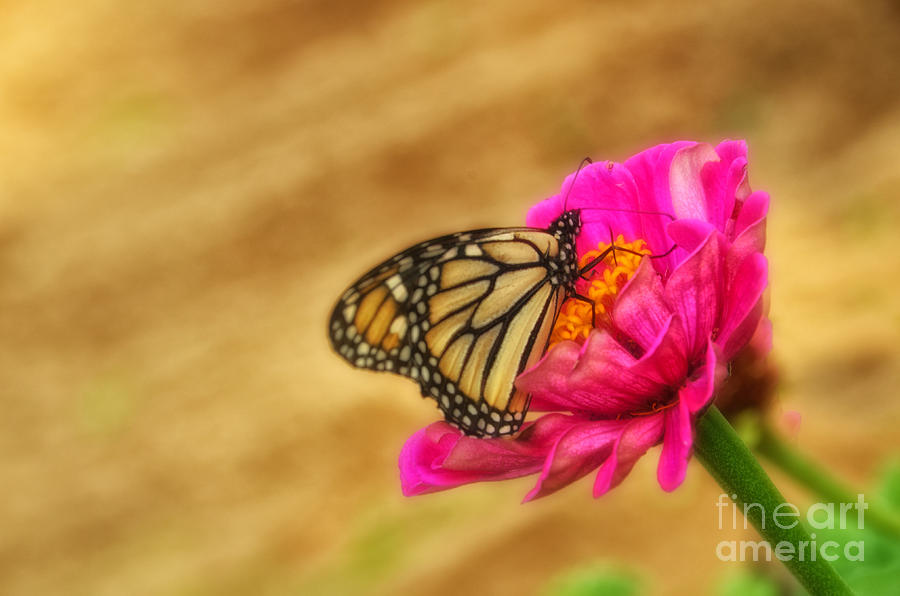 Butterflies Photograph - The Beauty Of Flowers by Tamera James