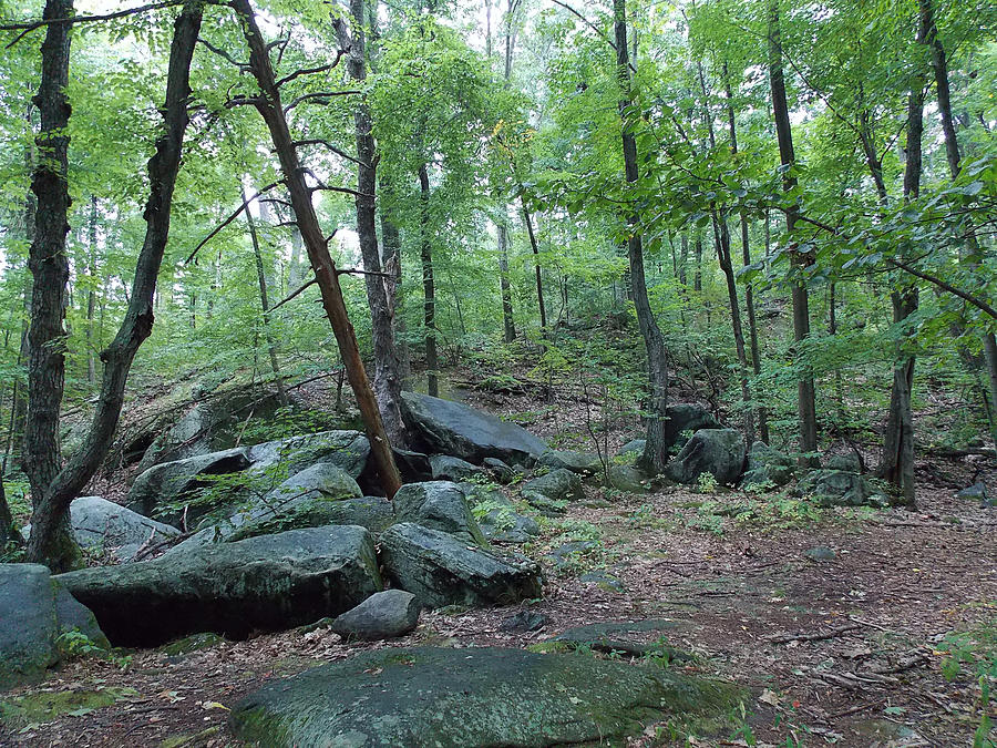 Rocks Photograph - The Beauty Of The Forest by Michael Claudio