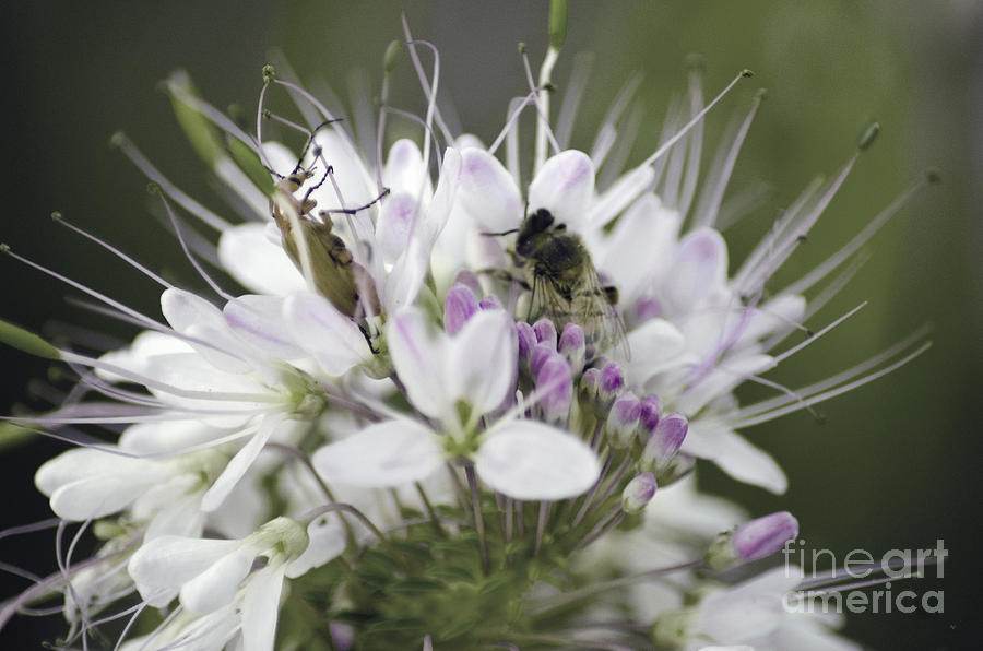 Bees Photograph - The Beetle And The Bee by Donna Greene