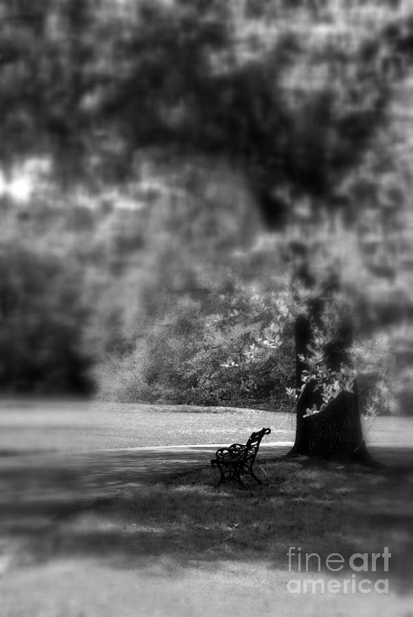 Bench Photograph - The Bench In The Park by Susanne Van Hulst