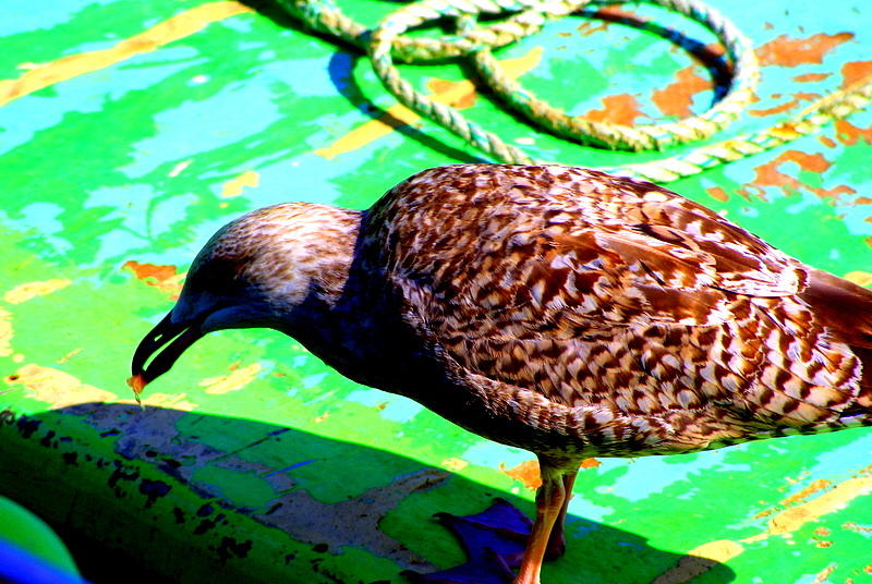 Sea Bird Photograph - The Bird by Amanda Pillet
