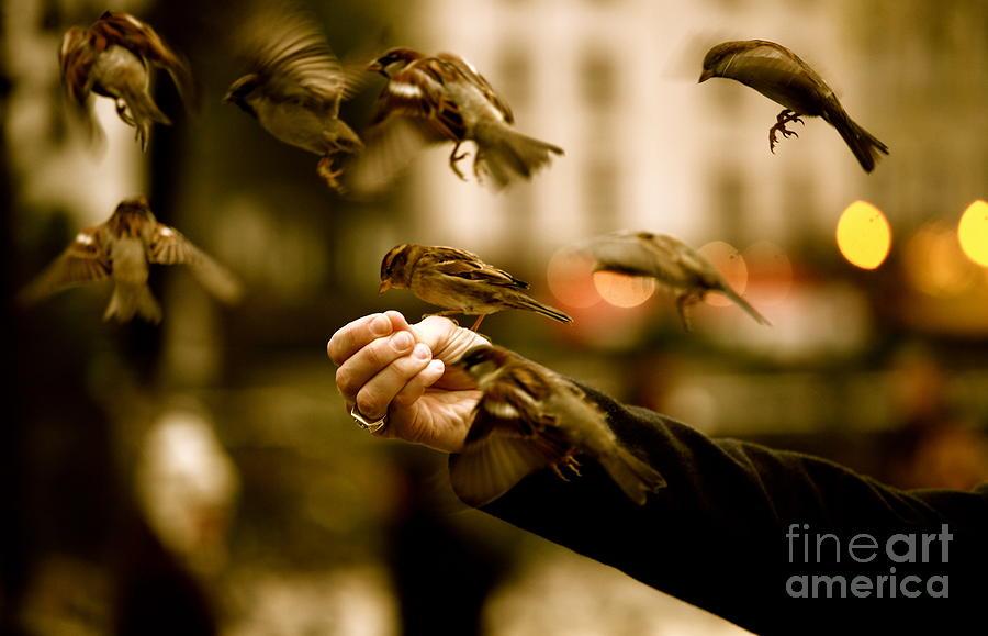Birds Photograph - The Birds by Zarija Pavikevik