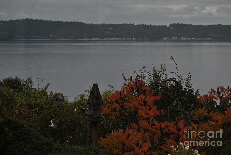 Dash Point Photograph - The Bluff by Paulina Roybal