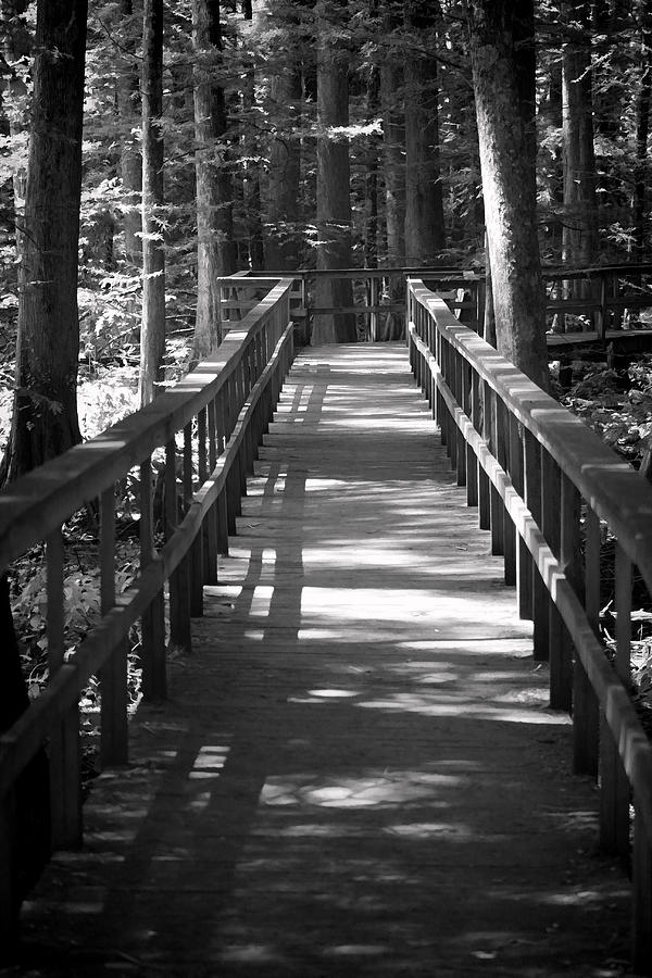 The Boardwalk In Black And White Photograph by Kathy Clark