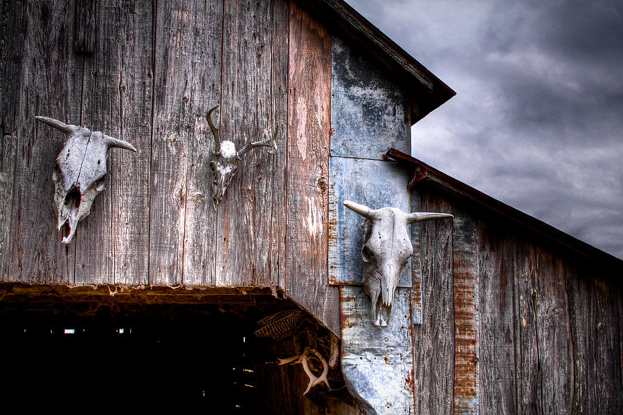 Cow Photograph - The Broad Side Of A... by Pixel Perfect by Michael Moore