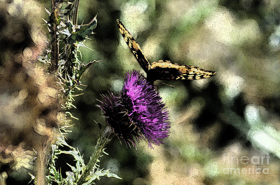 Butterfly Photograph - The Butterfly I by Donna Greene