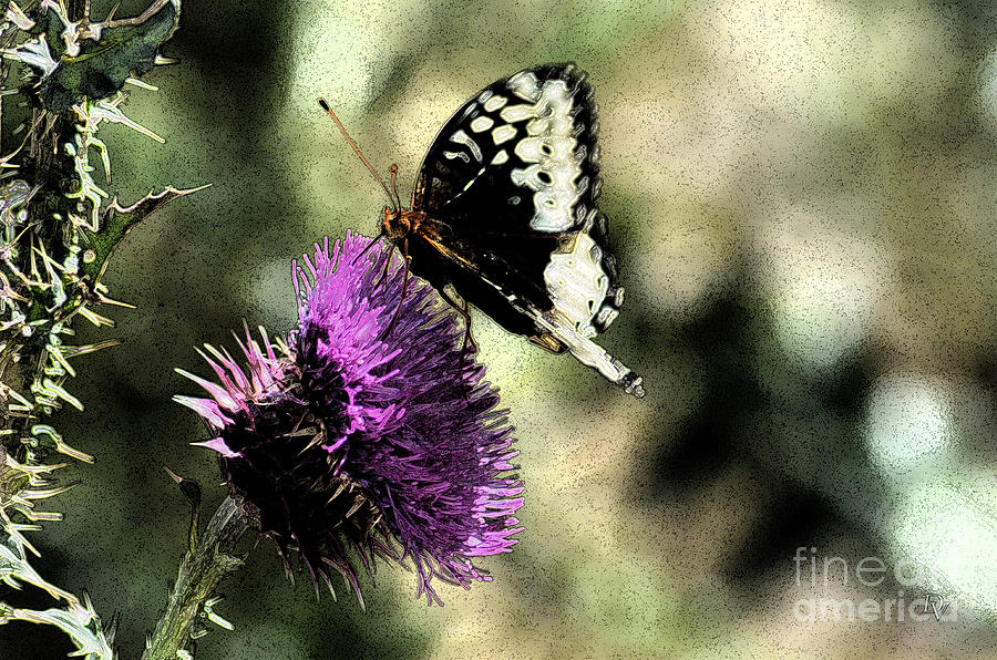 Butterfly Photograph - The Butterfly II by Donna Greene