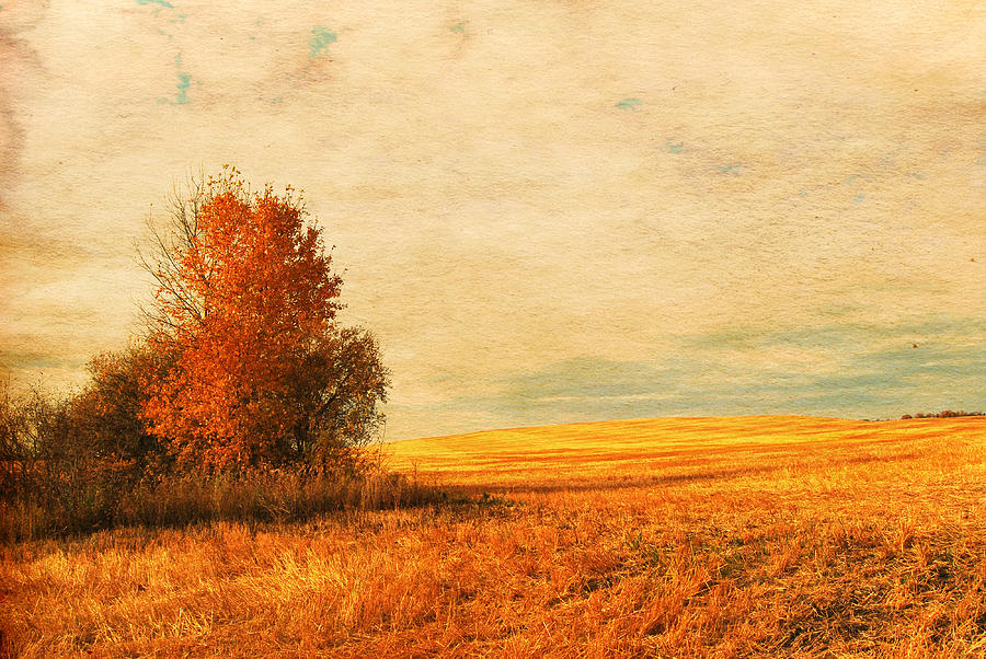 Land Photograph - The Careful Breeze  by Jerry Cordeiro