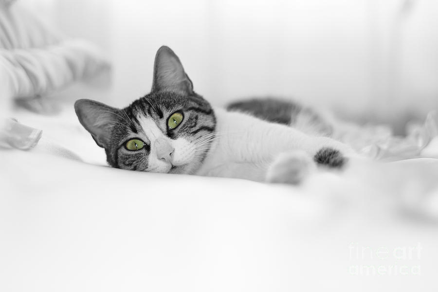 Cat Photograph - The Cat  by Zafer GUDER