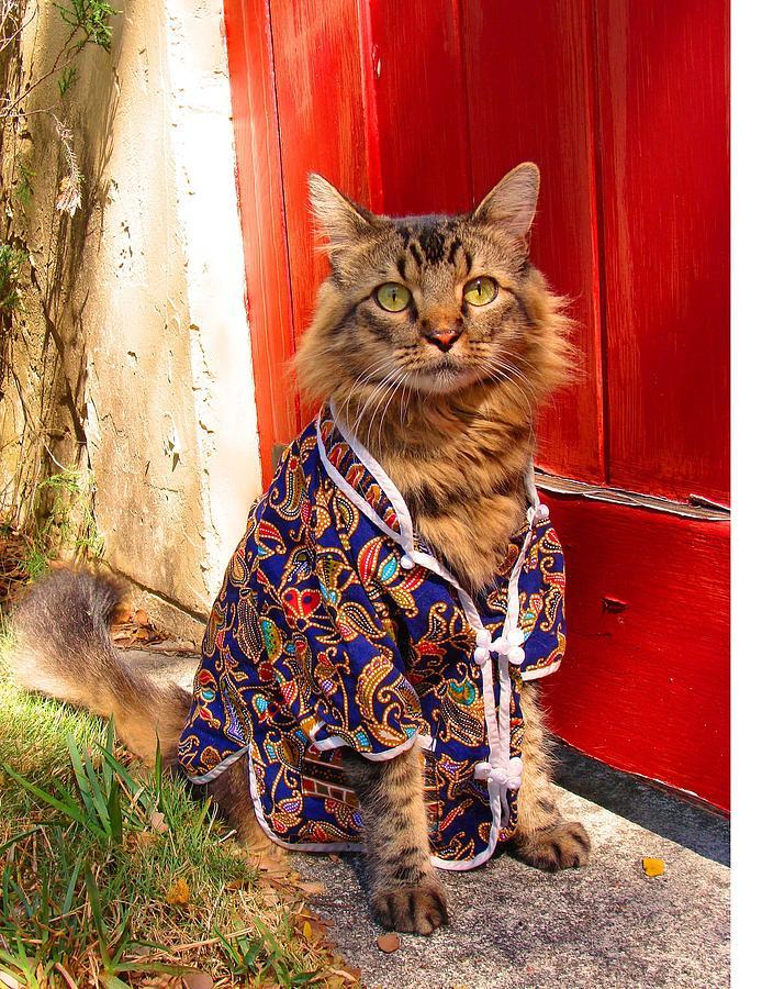 Pajamas Photograph - The Cats Pajamas by Joann Biondi