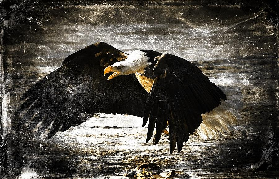 Bald Eagle Digital Art - The Chase by Carrie OBrien Sibley