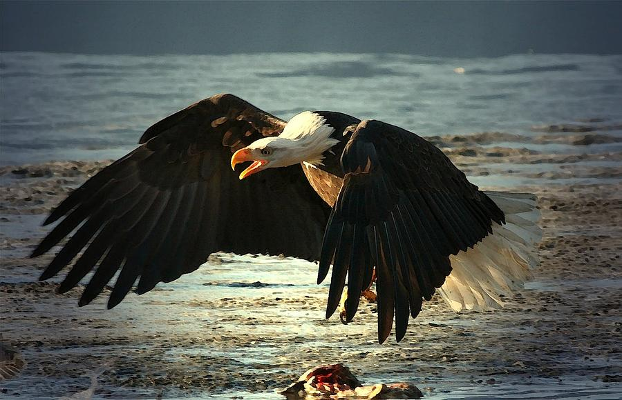 Bald Eagle Digital Art - The Chase Is On by Carrie OBrien Sibley