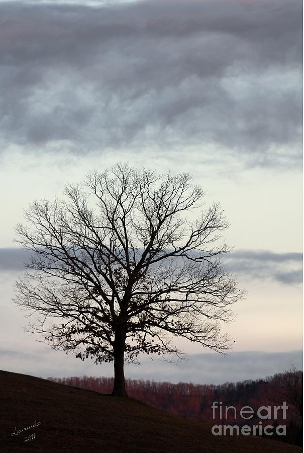 Tree Photograph - The Coming Winter by Laurinda Bowling