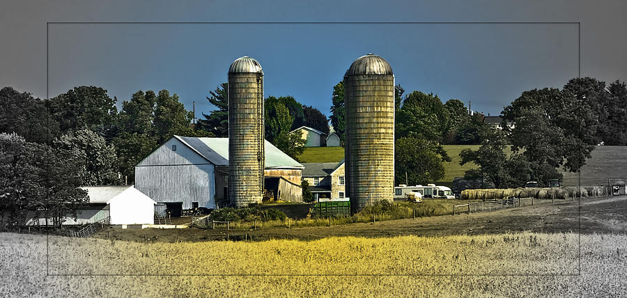 Farm Photograph - The Cows Have Come Home by DigiArt Diaries by Vicky B Fuller