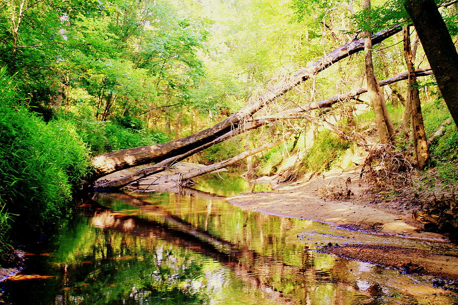 Creek Photograph - The Creek 2 by Hannah Miller