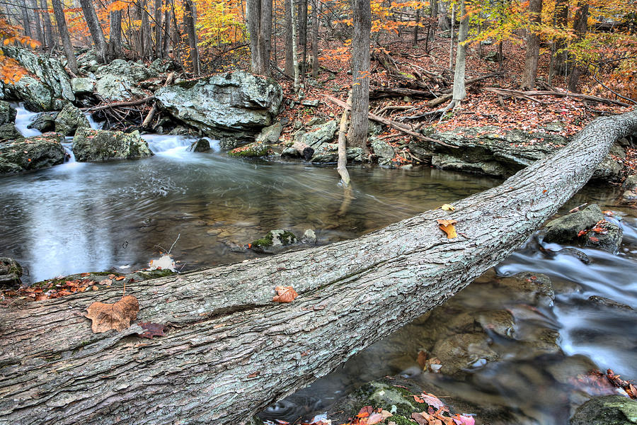 Cunningham Falls Photograph - The Crossing by JC Findley
