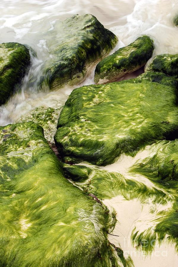 Rocks Photograph - The Dance Of Nature by Sophie Vigneault