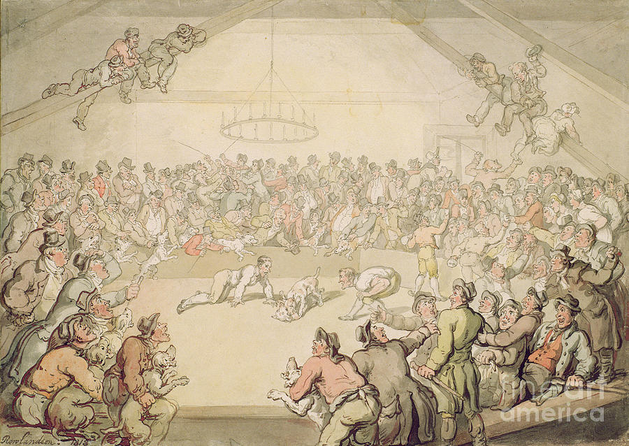 Arena; Gambling Painting - The Dog Fight by Thomas Rowlandson