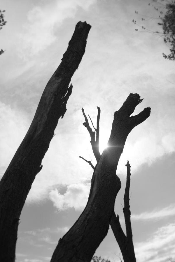 Tree Photograph - The Dragon Tree by Artist Orange
