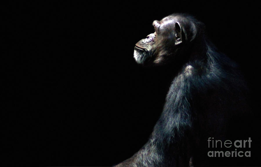 Ape Photograph - The Dreamer by Dan Holm