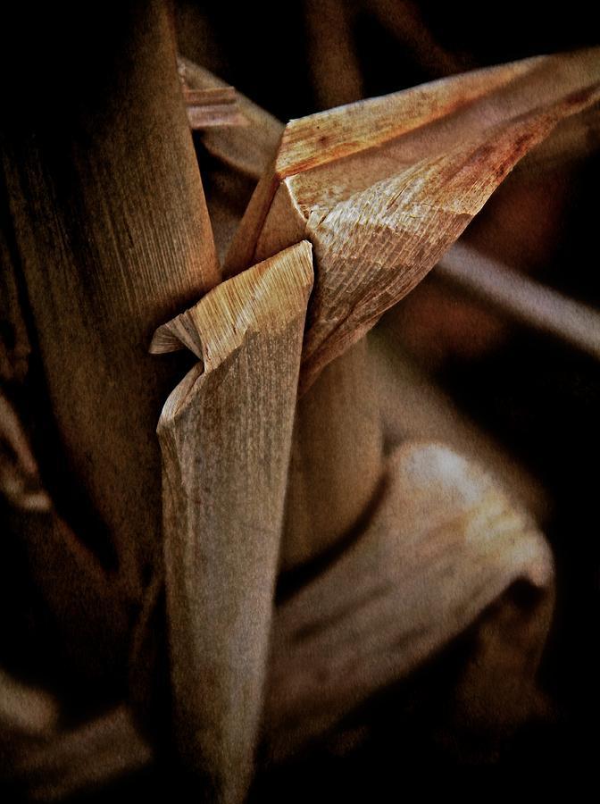 Vegetation Photograph - The Dry Season by Odd Jeppesen