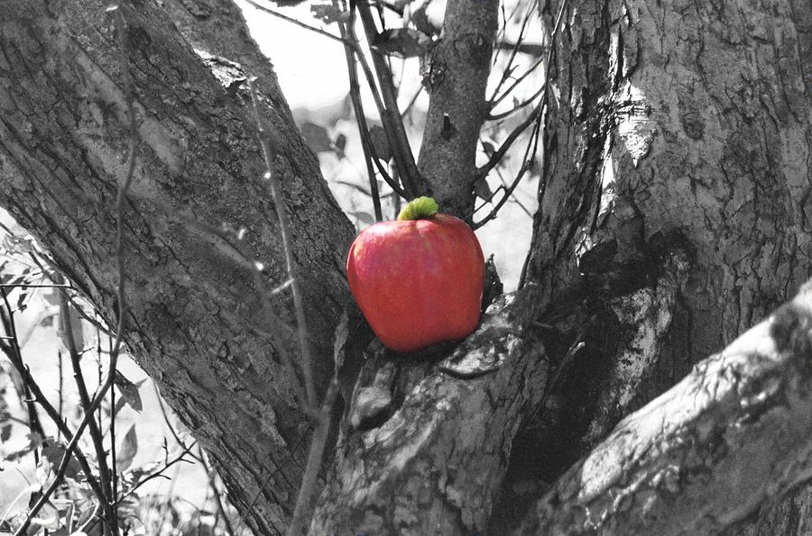 Apple Photograph - The Early Worm Gets The Apple by Paul Louis Mosley