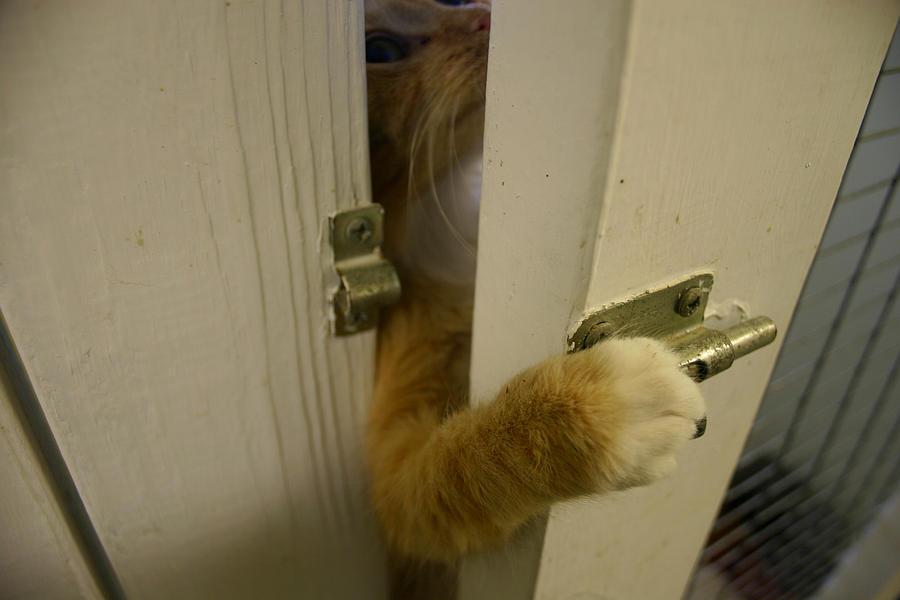 Cat Photograph - The Escape Artist by Nina Fosdick
