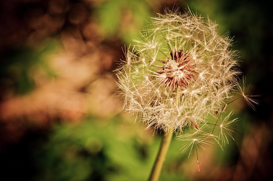Floral Photograph - The Escape by Jeremy Byers