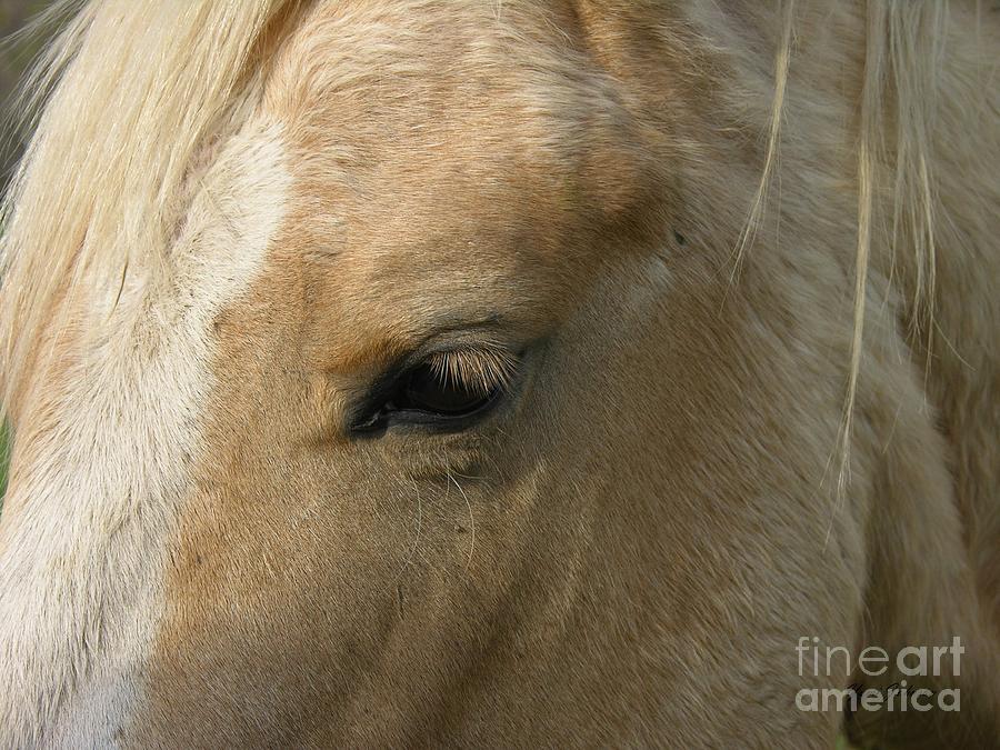 Horse Photograph - The Eye by Yumi Johnson