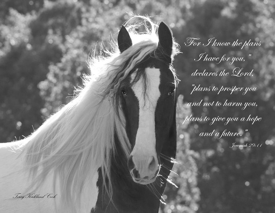 Horse Photograph - The Eyes Are The Window To The Soul by Terry Kirkland Cook