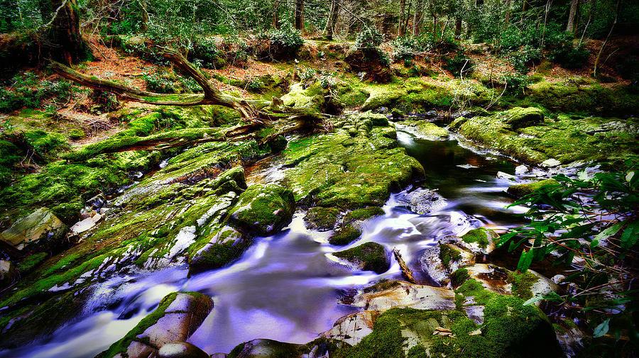 The Fairy Brook Photograph by Kim Shatwell-Irishphotographer