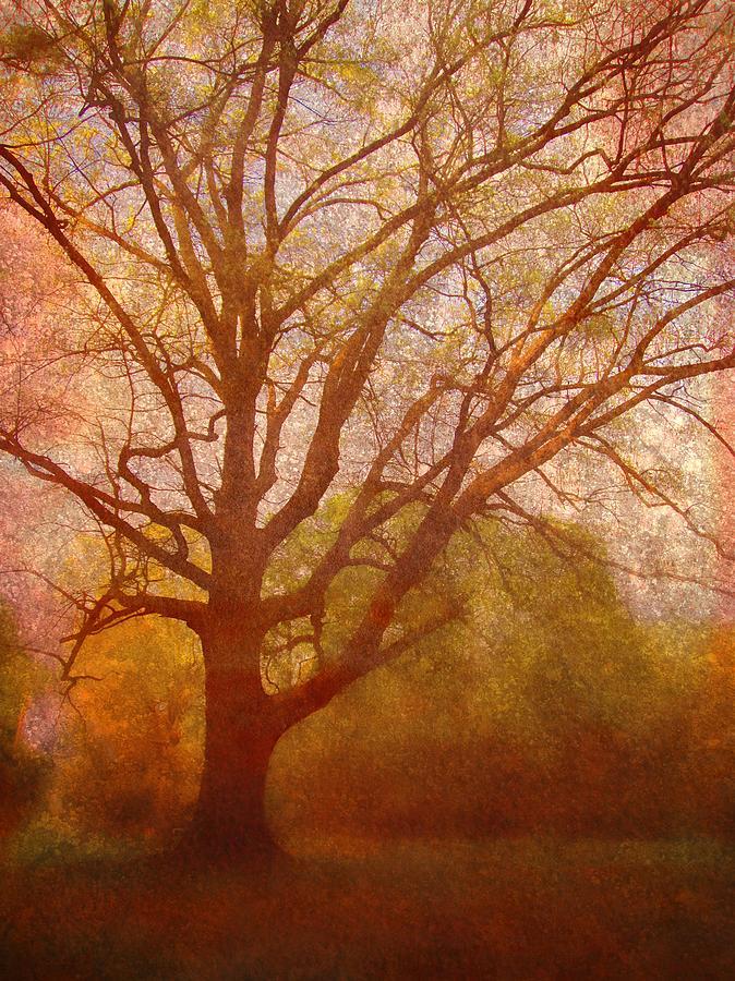 Brett Digital Art - The Fairy Tree by Brett Pfister
