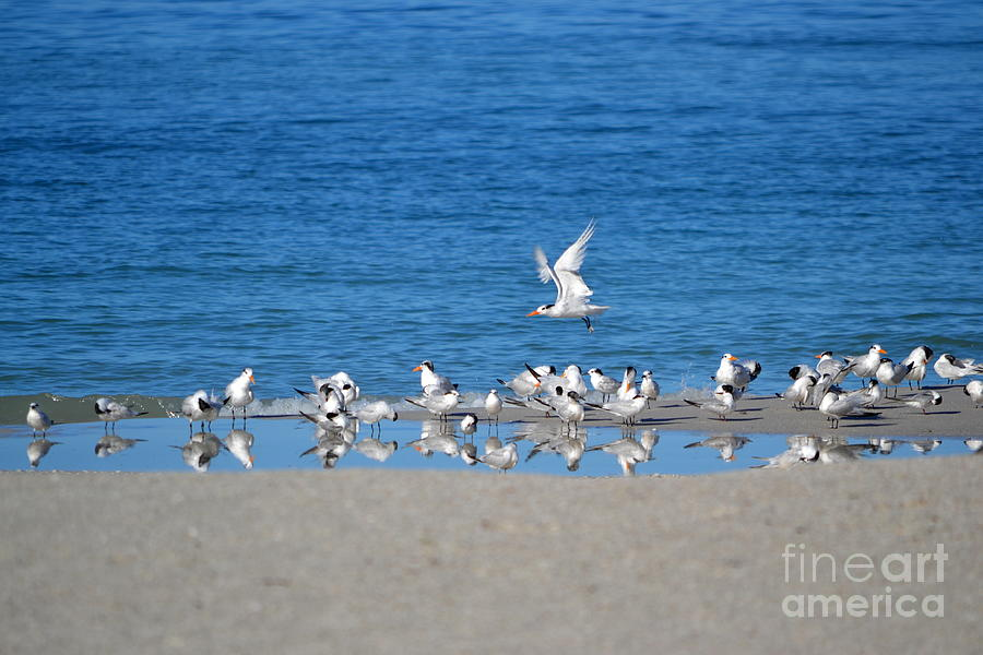 Seagulls Photograph - The Flock by Brenda Alcorn