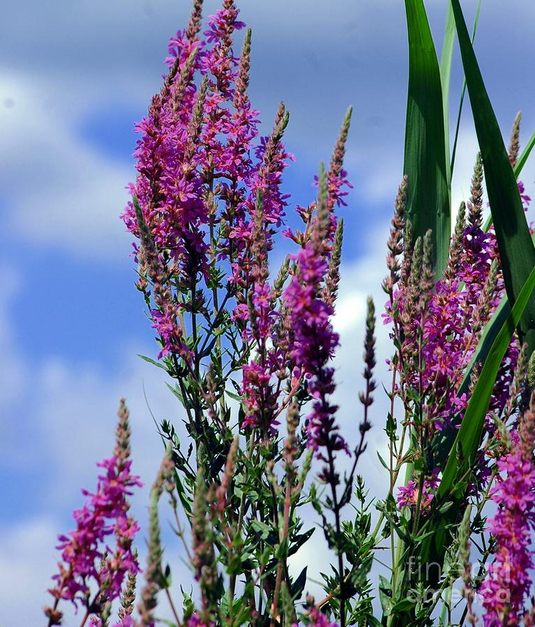 Purple Photograph - The Flowers Praise Him by Kathleen Struckle