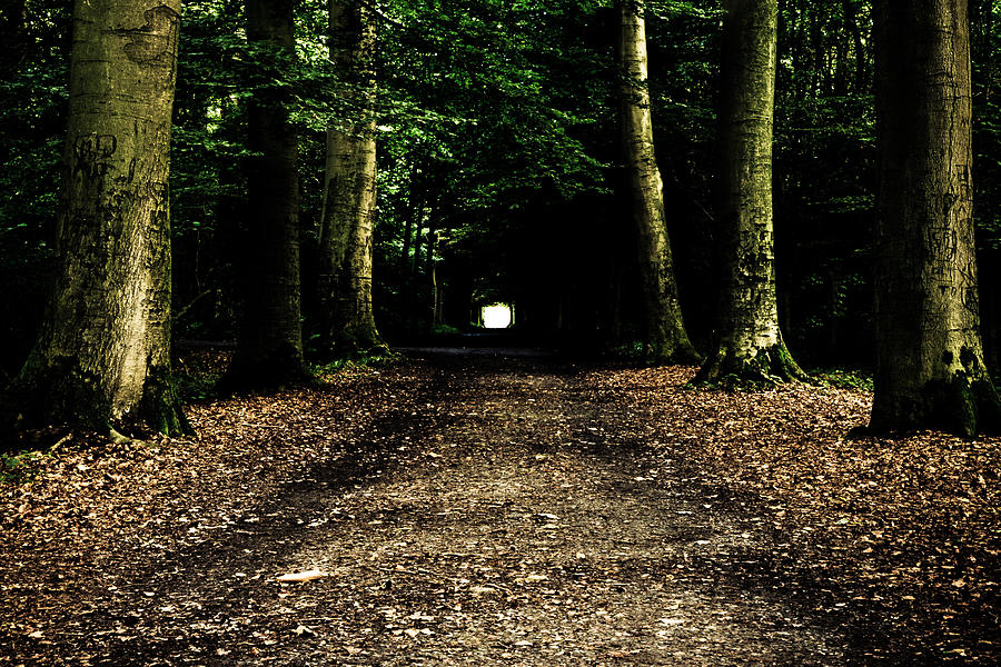 Tunnel Photograph - The Forest Tunnel by Justin Albrecht
