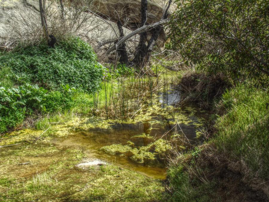 Frog Photograph - The Frog Pond by Cindy Nunn
