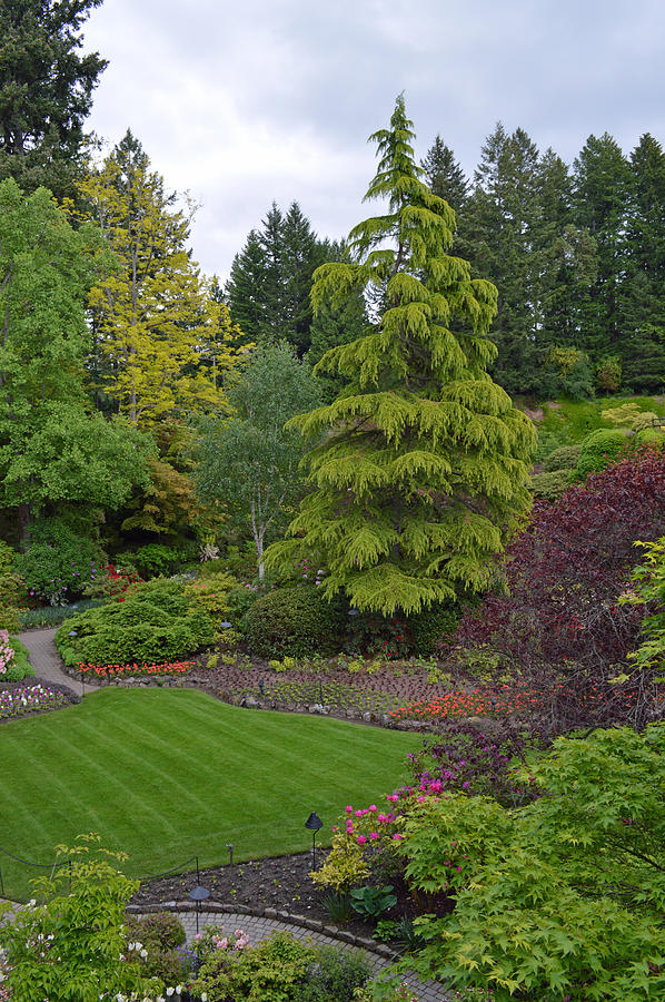 Vancouver Island Photograph - The Garden at Vancouver Island by Ann Marie Chaffin