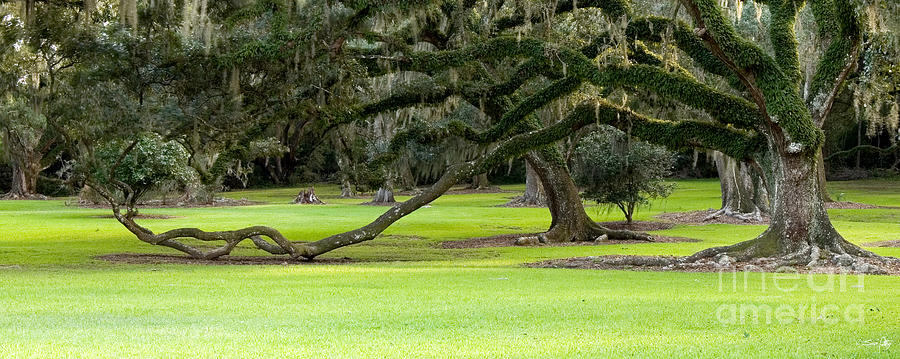 Tree Photograph - The Giving Tree by Scott Pellegrin