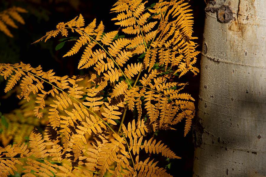 The Golden Fern Photograph by Jim Garrison