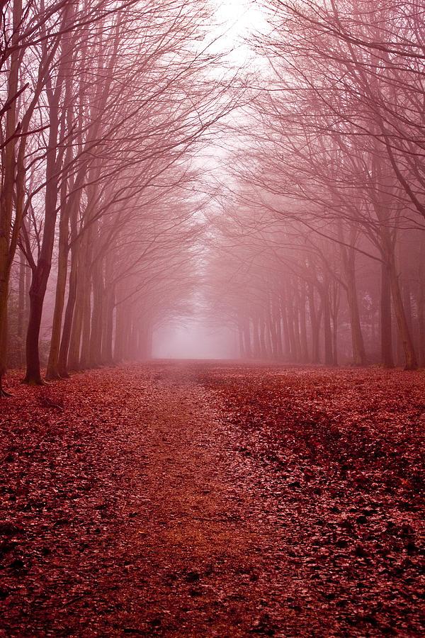Natural Landscape Photograph - The Golden Path by Aidan Minter