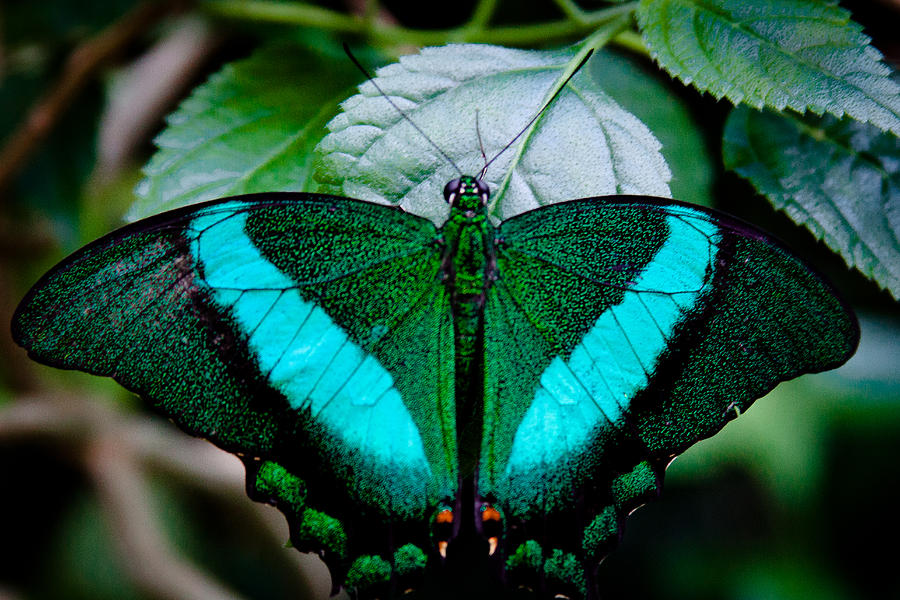 Butterfly Photograph - The Gorgeous Butterfly by David Patterson