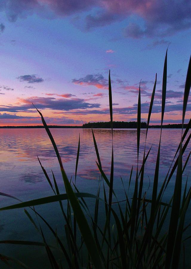 Sunset Photograph - The Grass by Virginia Lei Jimenez