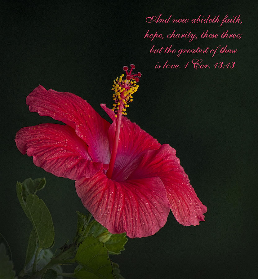 Red Photograph - The Greatest Of These Is Love by Kathy Clark