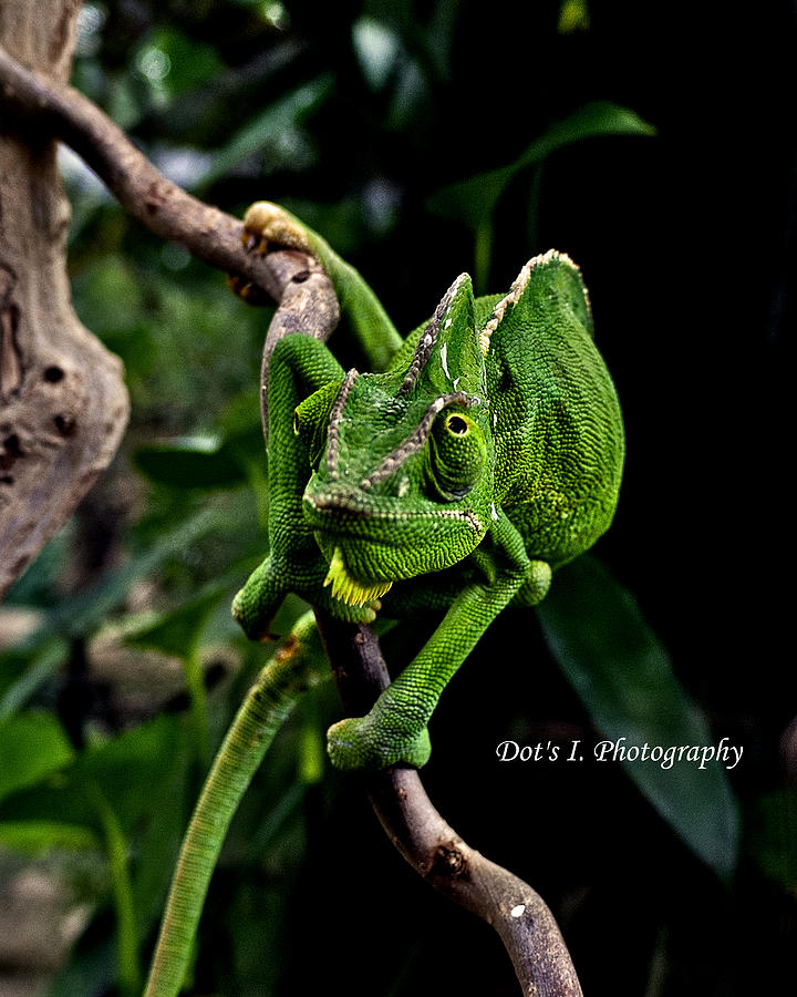 Butterfly Photograph - The Green Dude by Dorothy Hilde