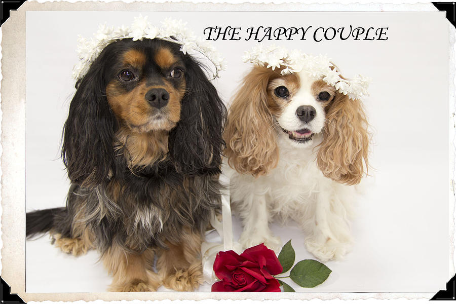 Couple Photograph - The Happy Couple by Daphne Sampson