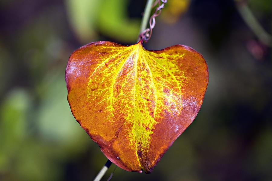 Autumn Photograph - The Heart Of Autumn by Douglas Barnard