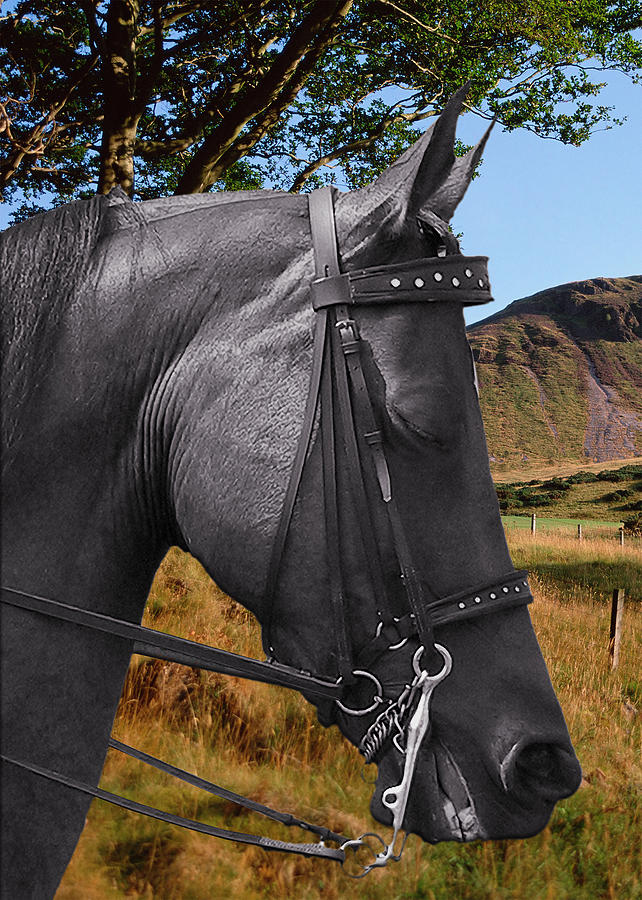 Horses Photograph - The Horse - Gods Gift To Man by Christine Till