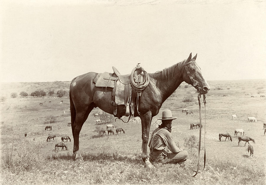 1910s Photograph - The Horse Wrangler, Photograph By Erwin by Everett