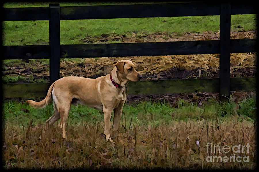 Dog Photograph - The Hunt by Cris Hayes